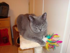 TaiBo the Cat 012