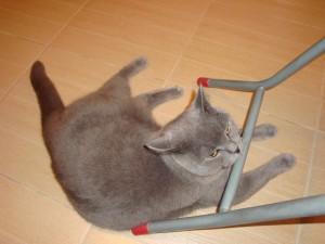 TaiBo the Cat 019
