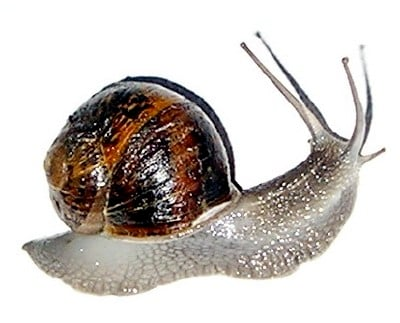 Controlling Snails in Your